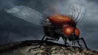 Morgai-flies