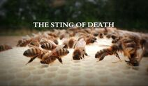 The-sting-of-death