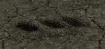Unearthed graves Necropolis H3