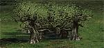 Dendroid saplings Rampart H3