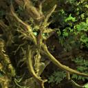 Drzewiec (H7) portret