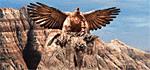 Upg. cliff nest Stronghold H3