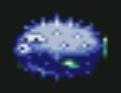 Poisson-souffleur
