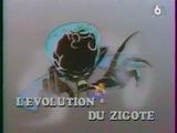L'évolution de Zygote