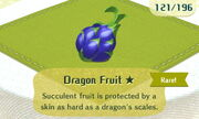 Dragon Fruit 1star