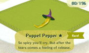 Puppet Pepper 1star
