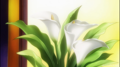 Flores Blancas- Portada