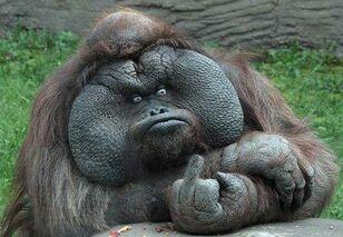 GorillaFinger