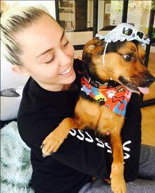 MileyCyrusDogBirthdayParty
