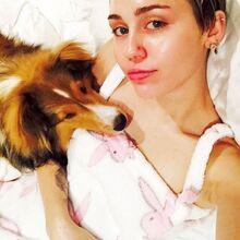 MileyCyrusEmuSelfie