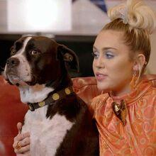 Mileydogthevoicew
