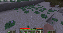 Peyote Growing