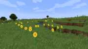 SunflowerPlains