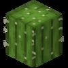 New Cactus