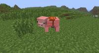 Saddled Pig