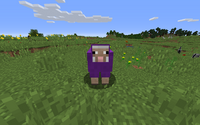 Purple Sheep In The Grass