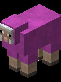 Magenta Sheep