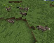 Stado osłów