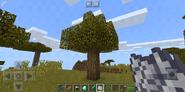 Oak Tree in SavannaZ