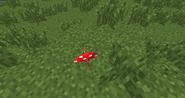 Small Red Mushroom