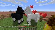 Donkey breeding
