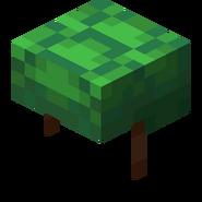 TurtleHelmet