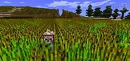 Dog im wheat