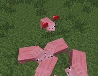 Pigbreeding