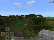 Swamp biome