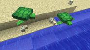 TurtlesAndEggs
