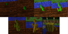 Melonin kasvu