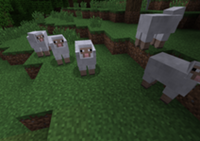 A lot Of Sheep