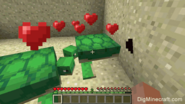 How to breed turtles3