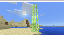 Desert Sugar Cane