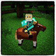 Jeb's Horse