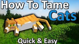 How to Tame a Cat
