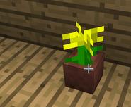 Potwyellowflower