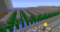A cactus farm