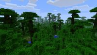 Minecraft-jungle-shot