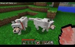 Wolf minecraft xbox 360 edition wiki fandom powered by wikia imag ccuart Gallery