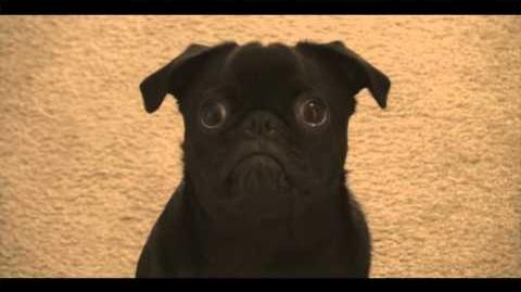 "Niles the Pug ""Hello"" Adele Cover"