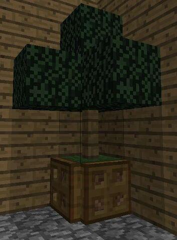 File:Indoor tree 2.jpg