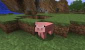 Cute Pig by KhuseleN