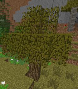 Roble de acacia