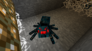 Araña de cuevas en cueva