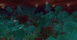 800px-Warped Forest