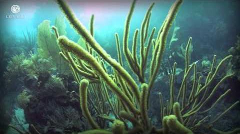 Tesoros bajo el mar Arrecifes de coral - ECOSISTEMAS DE MÉXICO-2