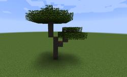 Acacia multi-dosel