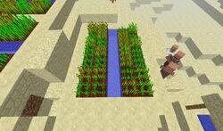 Cultivo del desierto