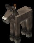 Cría de burro